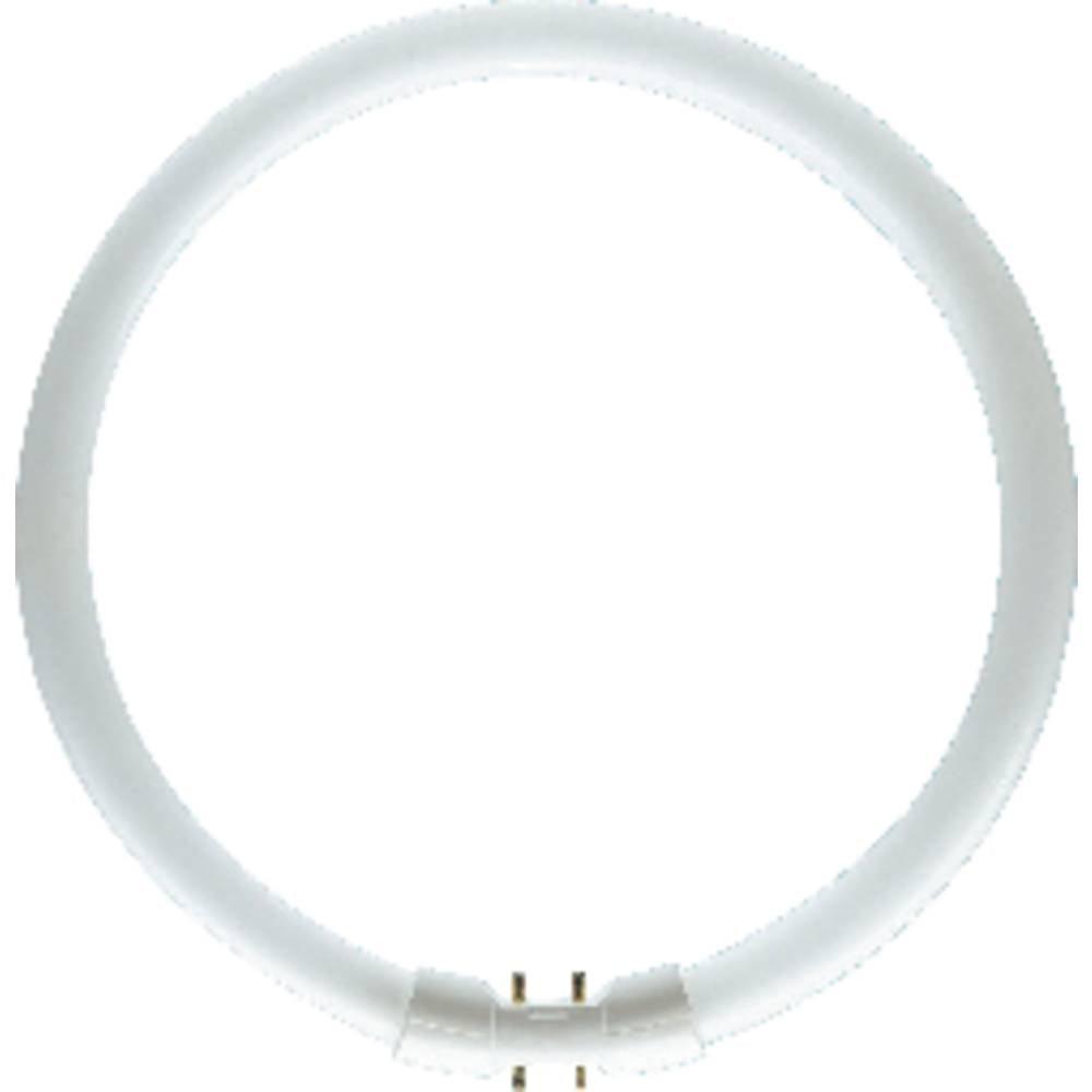 OSRAM zářivková trubice en.třída: A+ (A++ - E) 2GX13 40 W neutrální bílá 840 kruhová zářivka (Ø x d) 16 mm x 305 mm 1 ks