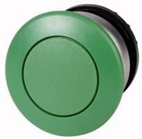 Pilztaster Grün