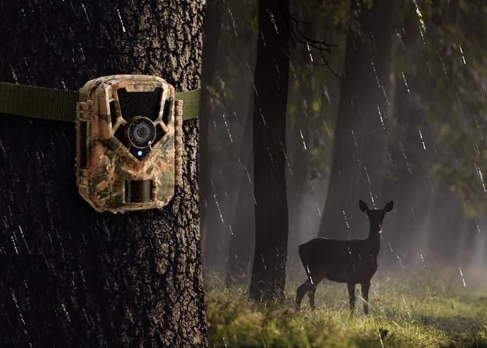 Wildkamera Beobachtung Reh