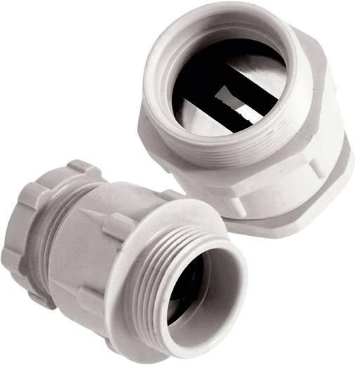 Kabelverschraubung M32 Polyamid Licht-Grau (RAL 7035) LappKabel SKINDICHT® SVFK-M 32/21 25 St.