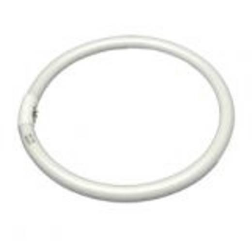 walimex Ersatzlampe für Makro Ringleuchte 28W 16230 Walimex