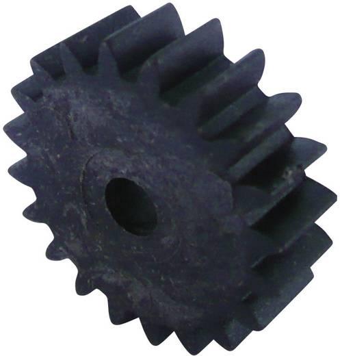 Holz, Kunststoff Zahnrad Modelcraft Modul-Typ: 1.0 Anzahl Zähne: 20 1 St.