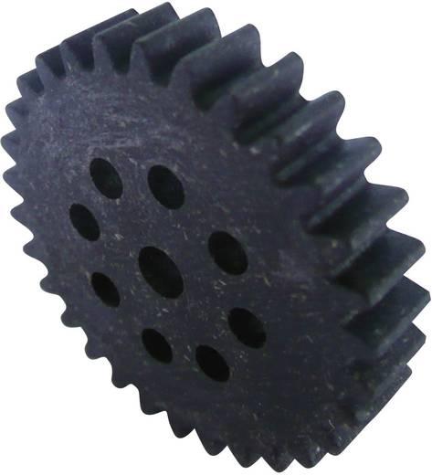 Zahnrad Holz / Kunststoff Modul 1