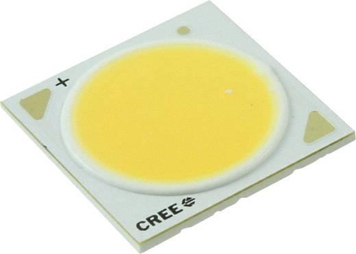 HighPower-LED Warm-Weiß 65 W 3320 lm 115 ° 37 V 1600 mA CREE CXA2530-0000-000N00T20E8