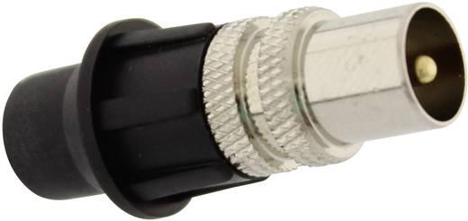 Koax-Stecker Steckverbinder Kabel-Durchmesser: 7 mm