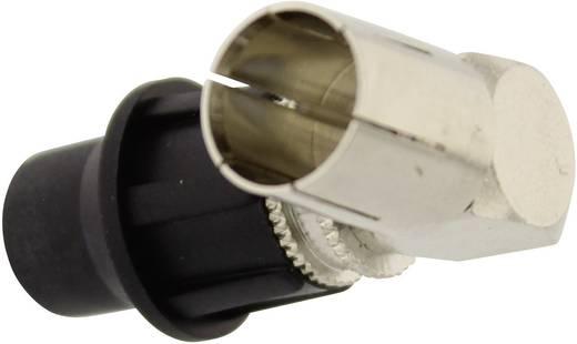 F-Stecker ohne Gewinde, gewinkelt Kabel-Durchmesser: 7 mm
