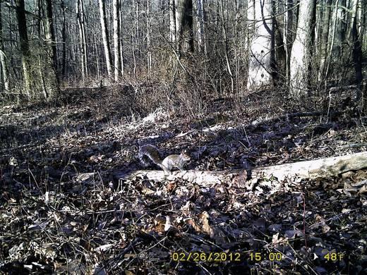 Wildkamera Spypoint Tiny Plus 10 Mio. Pixel WLAN, Black LEDs, Tonaufzeichnung Camouflage Braun