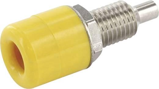 Laborbuchse Buchse, Einbau vertikal Stift-Ø: 4 mm Gelb econ connect TB4GE 1 St.