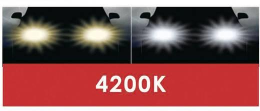 DINO Halogen Leuchtmittel Xenon Look H7 55 W