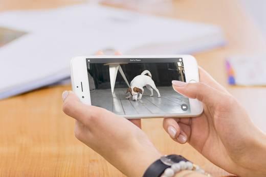 WLAN IP Kamera 1280 x 720 Pixel Petcube P8988