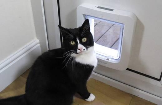 haustierklappe sureflap mikrochip cat door wei 1 st kaufen. Black Bedroom Furniture Sets. Home Design Ideas