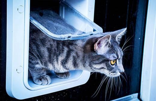 Haustierklappe SureFlap Mikrochip Cat door Braun 1 St.