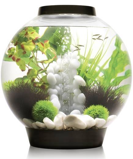aquarium 30 l mit led beleuchtung oase 45664 kaufen. Black Bedroom Furniture Sets. Home Design Ideas