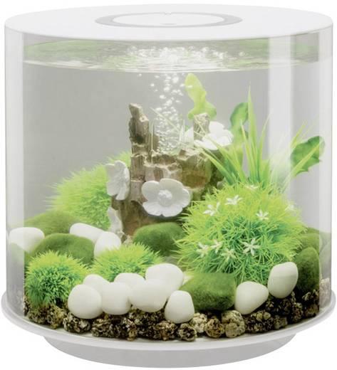 aquarium 15 l mit led beleuchtung oase 45930. Black Bedroom Furniture Sets. Home Design Ideas