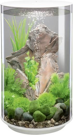 aquarium 30 l mit led beleuchtung oase 45950 kaufen. Black Bedroom Furniture Sets. Home Design Ideas