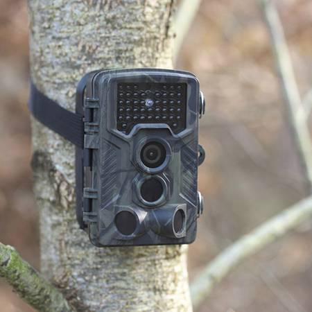 Wildlife cameras for animal surveillance