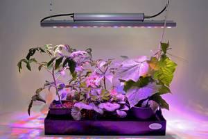 Pflanze LED Wachstumslampe AC 220V-240V Acryl Aluminium 210x95mm Licht