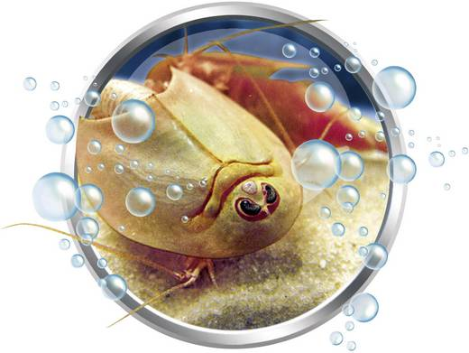 Galileo-Original Triops Max