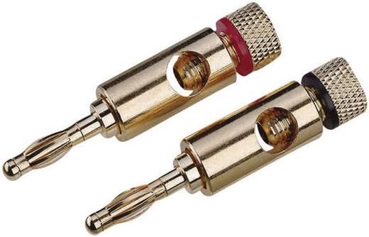 Lautsprecher-Steckverbinder Stecker, gerade Polzahl: 1 Gold High-End 2 St.