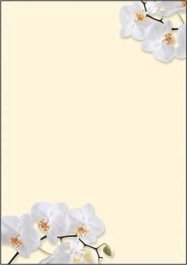 Motiv-Papier DP904