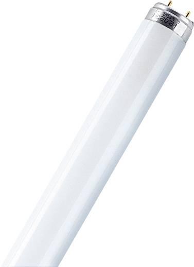 Leuchtstoffröhre G13 36 W Röhrenform EEK: n.rel. 1 St.