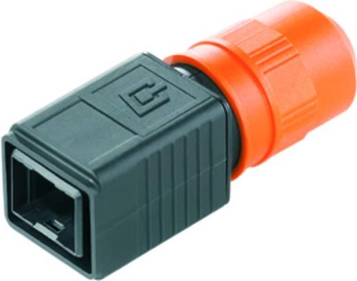 Sensor-/Aktor-Steckverbinder, unkonfektioniert RJ45 Steckergehäuse Weidmüller 1962520000 IE-PH-V04P 10 St.