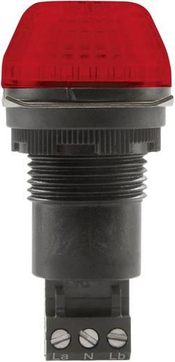 Signalleuchte LED Auer Signalgeräte IBS Rot Rot Dauerlicht, Blinklicht 230 V/AC