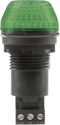 Signalleuchte LED Auer Signalgeräte IBS Grün Grün Dauerlicht, Blinklicht 24 V/DC, 24 V/AC