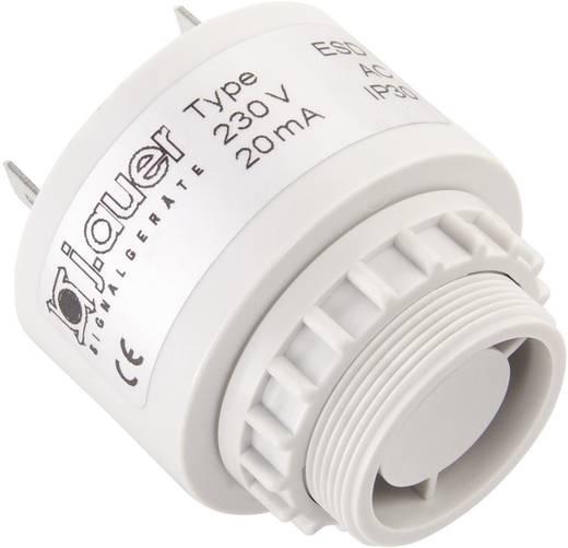 Signalsummer Auer Signalgeräte ESD Dauerton 230 V/AC 90 dB