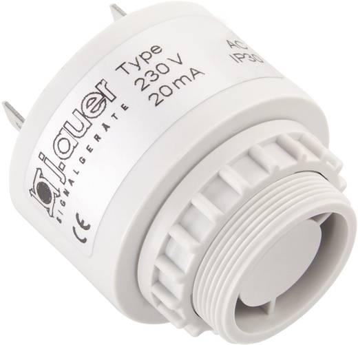 Signalsummer Auer Signalgeräte ESP Pulston 24 V/DC, 24 V/AC 90 dB