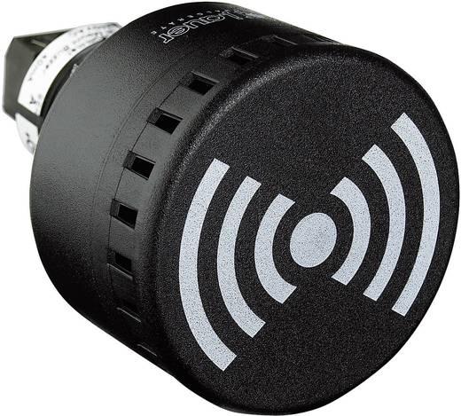 Signalsummer Auer Signalgeräte ESG Dauerton, Pulston, Wobbelton 230 V/AC 65 dB