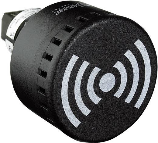 Signalsummer Auer Signalgeräte ESG Dauerton, Pulston, Wobbelton 12 V/DC, 12 V/AC, 24 V/DC, 24 V/AC 65 dB