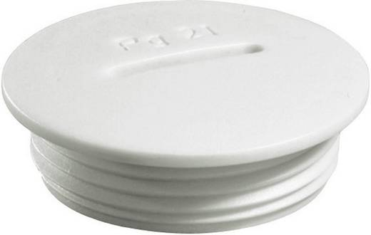 Verschlussschraube PG42 Polyamid Licht-Grau (RAL 7035) Wiska VSG 42 1 St.