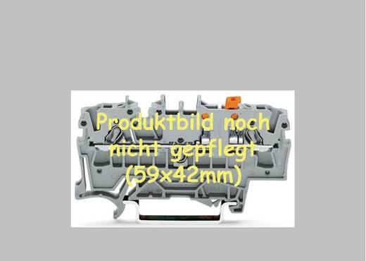 Dosenklemme flexibel: - starr: 0.28-0.5 mm² Polzahl: 4 WAGO 243-744/000-012 50 St. Orange