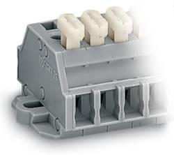 Barrette à bornes WAGO 261-428/331-000 6 mm ressort de traction Affectation des prises: L gris 50 pc(s)