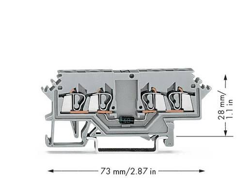 WAGO 280-623/281-411 Diodenklemme 5 mm Zugfeder Belegung: L Grau 100 St.