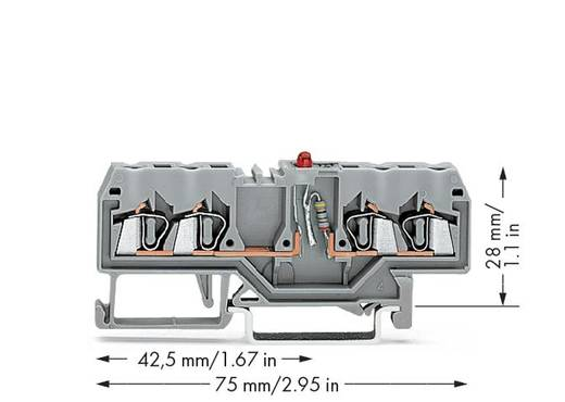 LED-Klemme 5 mm Zugfeder Belegung: L Grau WAGO 280-809/281-413 100 St.