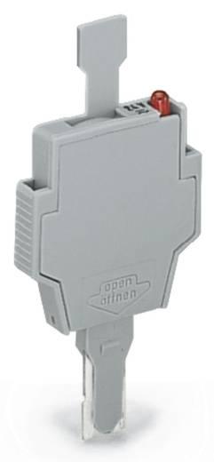 Sicherungsstecker mit Lasche WAGO Inhalt: 50 St.