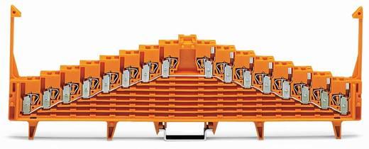 Potentialklemme 7.62 mm Zugfeder Orange WAGO 727-135/003-000 25 St.