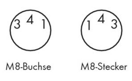 Sensor-/Aktor-Steckverbinder, konfektioniert M8 Stecker, gewinkelt, Buchse, gewinkelt 1 m Polzahl: 3 WAGO 756-5204/030-0