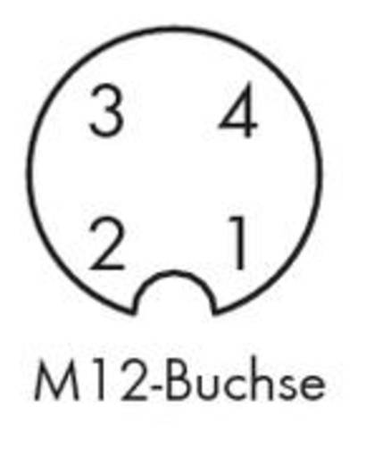 Sensor-/Aktor-Steckverbinder, unkonfektioniert M12 Buchse, gerade Polzahl: 4 WAGO 756-9212/040-000 5 St.