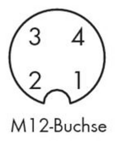WAGO 756-5301/040-050 Sensor-/Aktor-Steckverbinder, konfektioniert M12 Buchse, gerade 5 m Polzahl: 4 10 St.