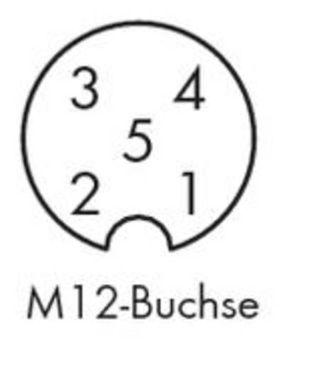 Sensor-/Aktor-Steckverbinder, konfektioniert M12 Buchse, gewinkelt 5 m Polzahl: 3 WAGO 756-5302/050-050 10 St.