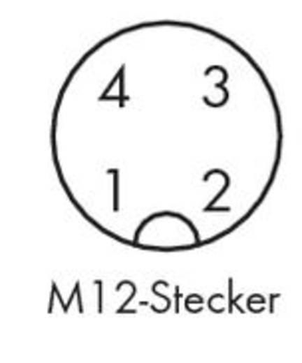 Sensor-/Aktor-Steckverbinder, unkonfektioniert M12 Stecker, gewinkelt Polzahl: 4 WAGO 756-9204/040-000 5 St.