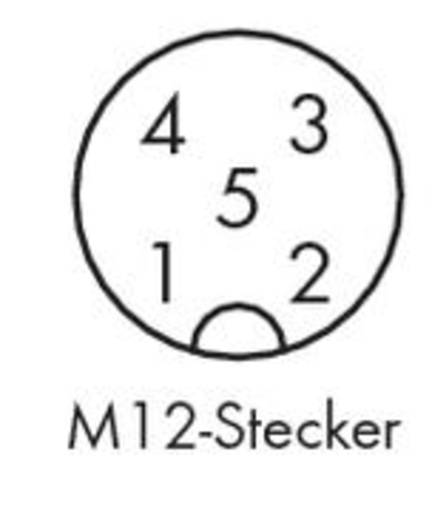 Sensor-/Aktor-Steckverbinder, unkonfektioniert M12 Stecker, gewinkelt Polzahl: 5 WAGO 756-9204/050-000 5 St.