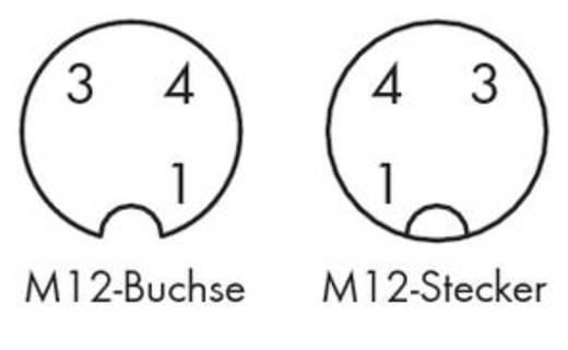 Sensor-/Aktor-Steckverbinder, konfektioniert Stecker, gewinkelt, Buchse, gewinkelt 2 m WAGO 756-5404/030-020 10 St.