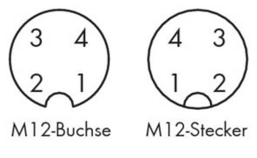 Sensor-/Aktor-Steckverbinder, konfektioniert M12 Stecker, gerade, Buchse, gerade 2 m Polzahl: 4 WAGO 756-5401/040-020 1