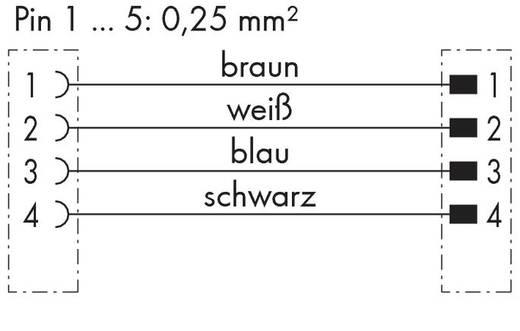 WAGO 756-5508/040-020 Sensor-/Aktor-Steckverbinder, konfektioniert M8 Stecker, gewinkelt, Buchse, gerade 2 m Polzahl: 4