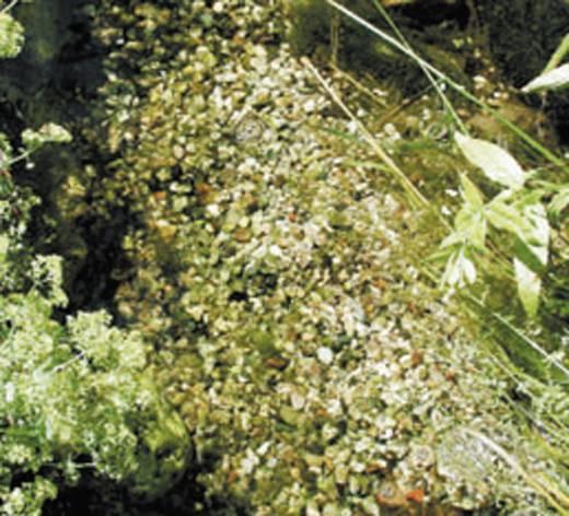 Algenbekämpfung FIAP 2900 500 ml