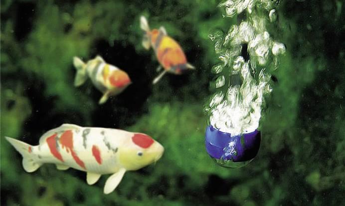 Fische benötigen reichlich Sauerstoff